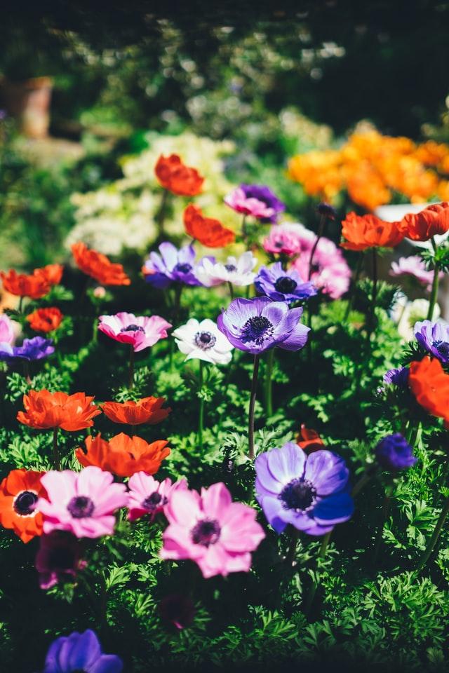 Rejs ud og få inspiration til din have